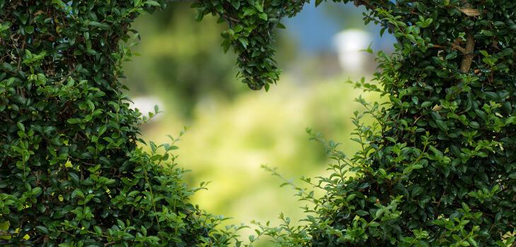 coeur en paix, coeur dans la nature